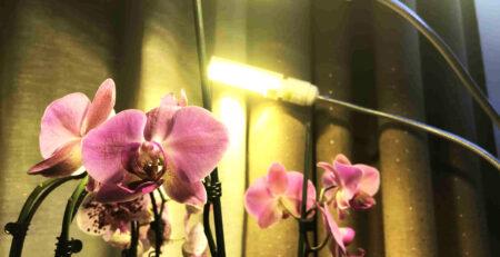 Lampada per orchidee, 156 led
